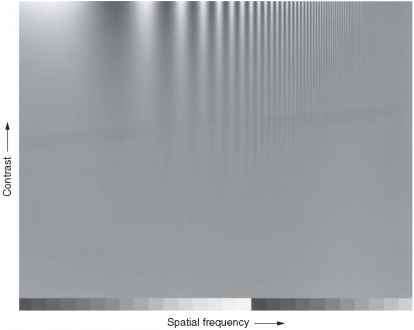 Human Spatial Frequency
